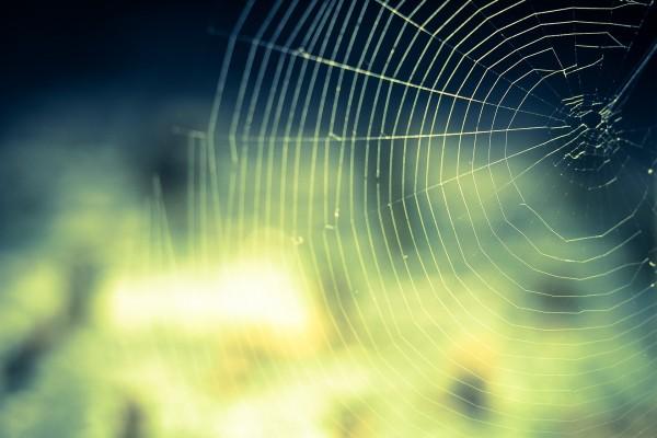 cobweb-959578_1920