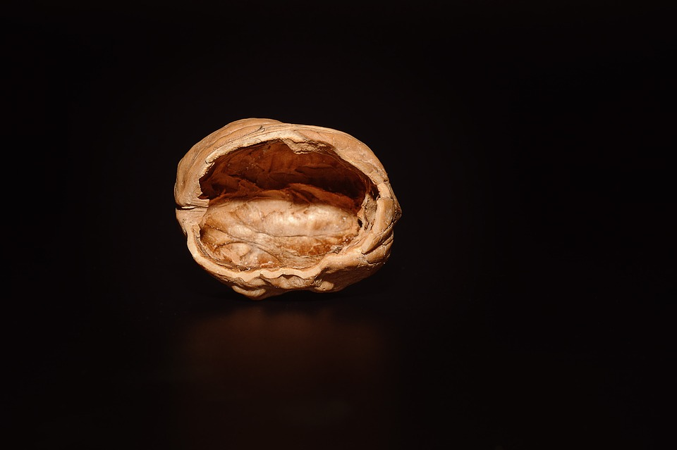 Anthrwpoi doryforoi - walnut