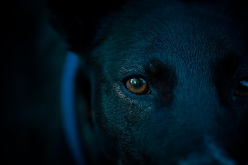 dog-head-1449001